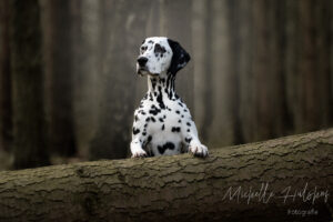 Dog's in the forest